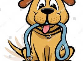 Dog Walker available immediately