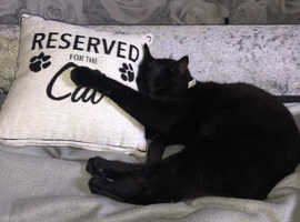 Tewkesbury's Cat & Small Pet Home Sitter