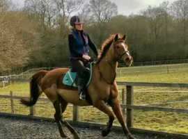 Fun all rounder for sale!!