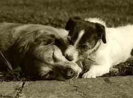 DOG COACH & BEHAVIOUR CONSULTANT, GLASGOW