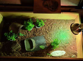 Tortoise and set up