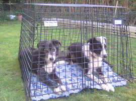 Dog cage(s) for Vauxhall Vectra Estate