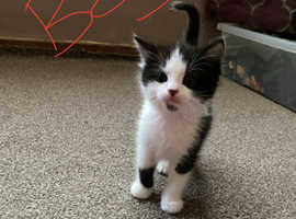 Adorable kittens ready now
