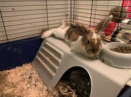 1 male adult male 1 male bunny