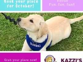 Puppy classes, dog training, agility, 1:1 services