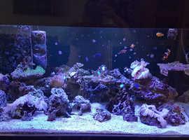 4ft marine fish tank complete setup