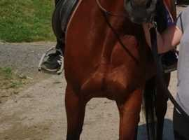 For long-term full loan my standardbred