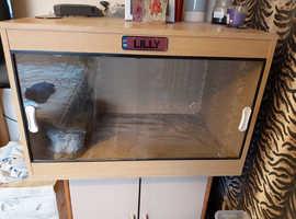 Vivarium 3ft by 2ft full reptile setup