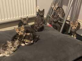 9 absolutely stunning kitten