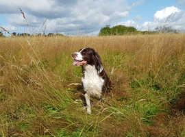 Bark Avenue - Dog Walking, Dog Gooming & Pet Home Visits
