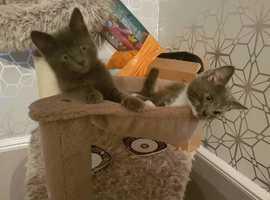 2 boy cats