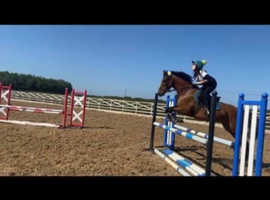 BS Show jumping Horse For Sale