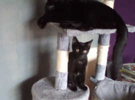 1 Year old male cat and 12 week old female