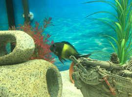 Cichlids For Sale & Rehome in Weston-super-Mare | Find Fish