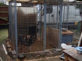 3 dog aviaries for the kennels, garden