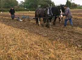 Ransomes rhb horse plough