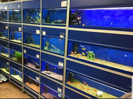 All types of tropical fish. Cold water fish available