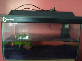 Starter fish tank for the home