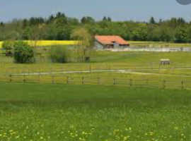 Wanted - paddock/stables/farm/livery