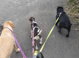 Dog walking and pet sotting services