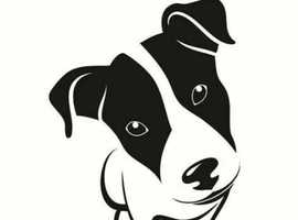 Jack Russell wanted