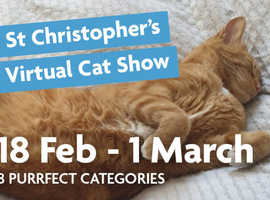 St Christopher's Virtual Cat Show