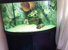 Looking to swap my 350L corner tank for a longer tank