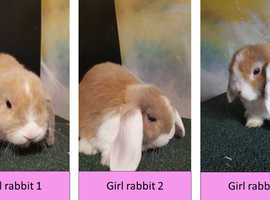 5 rabbits up for sale (3 girls, 2 boys)