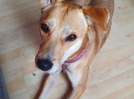 Huskita dog for sale
