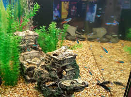 50+ tropical fish
