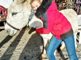 Super sweet donkey