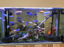 4ft 300 litre fish tank and fish for sale