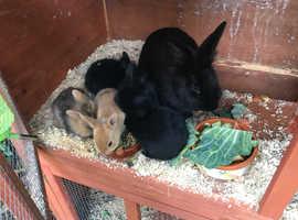 6 baby rabbits