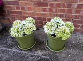 Green plastic flower tubs