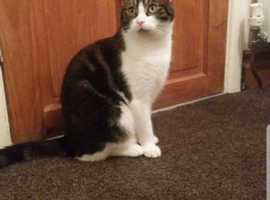 Missing cat since 25th June 2020