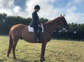 2 Loving Horses For Sale