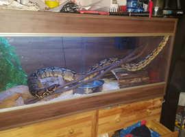 Boa Snakes For Sale & Rehome in Basingstoke | Find Snakes