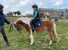 Confidence giving older lead rein pony wanted