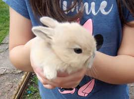 Beige baby rabbit