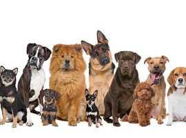 Stockport dog walking & sitting services