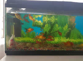 Aquerien with alto a beatyfull fishes