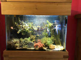 Complete Fish Tank and unit including tropical fish for sale