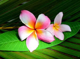 Great Lomi Lomi massage, 2 or 4 hands - relax, unwind, enjoy!