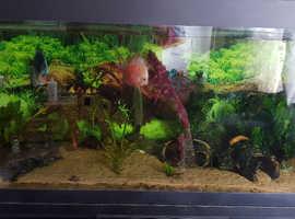 4ft fluval fish tank, complete set up