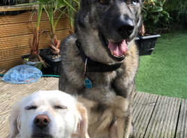Holiday accommodation needed for my 2 dogs