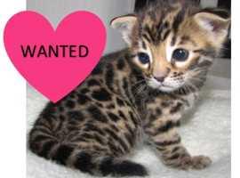 Kitten wanted!