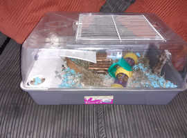 1 year old hamster and full set up for sale