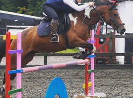 Super all rounder mare