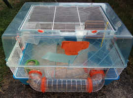 Two Syrian hamsters looking for good home  (free)