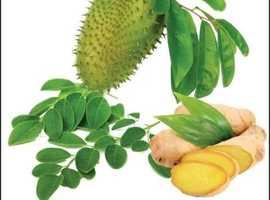 Best Soursop Leaf Powder Suppliers In UK
